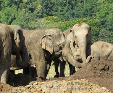 elephantsdokmaifamily.jpg