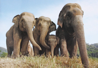 Elephant  Gift Card | Family in the Field | Color Photo