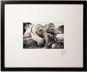 Black & White Framed Photograph of Baby Elephants by Lek