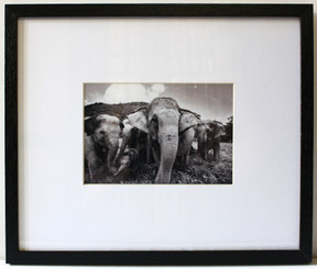 Black & White Framed Photograph of Elephant Family by Lek