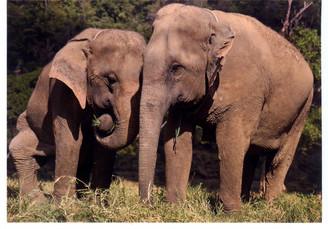 Elephant Color Gift Card - Medo & Mae Lanna
