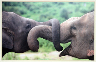 Color Elephant Photograph of Hope & Malai Tong by Lek