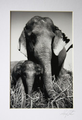 Black & White Photo - Baby Elephant with Auntie by Lek