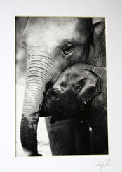 Black & White Elephant Photograph by Lek