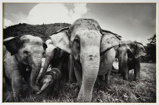 Elephant Photograph of Faa Mai's Family by Lek