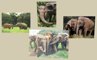 Elephant Colour Gift Cards - Set of 4