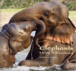 Elephants Living in Sanctuary  - Elephant Photographs by Sangduen Chailert