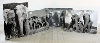 Black & White Elephant Gift Cards - Set of 4