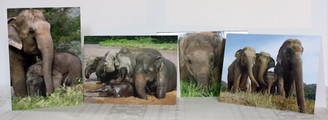 Elephant Color Gift Cards - Set of 4