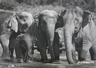 Elephant Gift Card | Navaan's Family | Black & White Photo