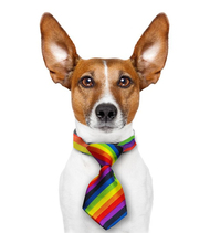 Mini Rainbow Pet Tie (Dogs / Cats) - LGBT Gay and Lesbian Pride Pet Accessories
