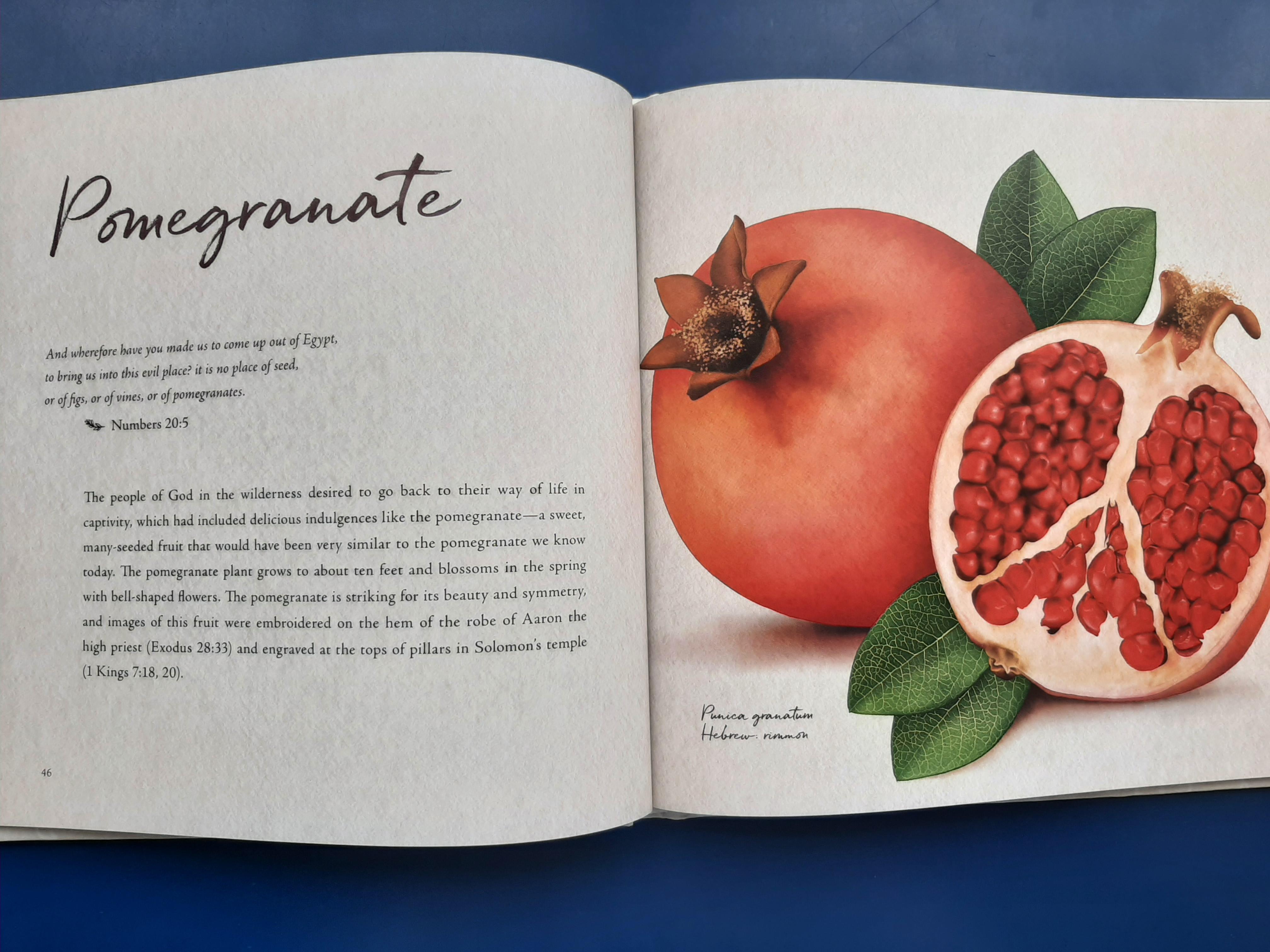in-the-garden-pomegranate.jpg