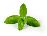 PG-Free Organic Peppermint e-juice by Velvet Vapors