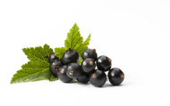 Currant 50mL SALE!