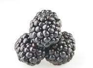 PG-Free Organic Blackberry e-juice by Velvet Vapors