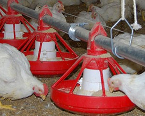 Feeding programs for pullets require pans to hold low volumes of feed.