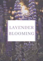 Lavender Blooming - Autumn Special