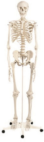 Classic Skeleton Model 3B¨ Stan 949967 Each/1