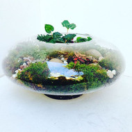 Low Glass Terrarium