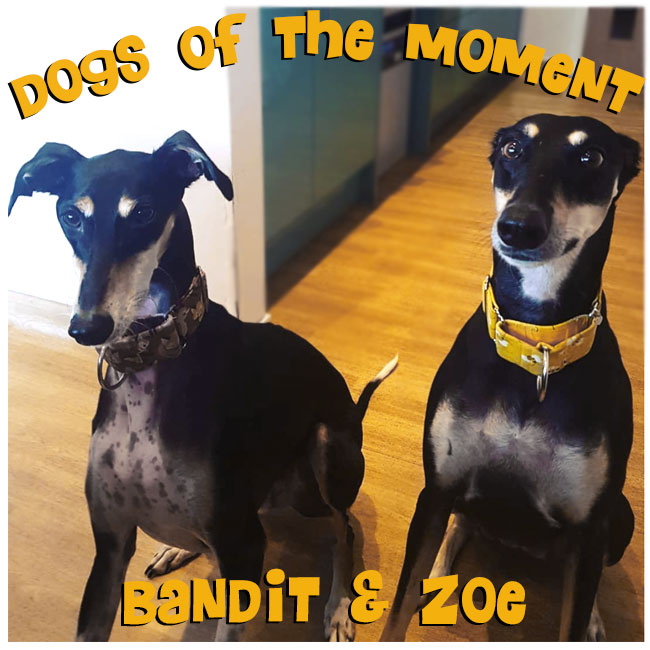 Dogs of the Moment Bandit & Zoe