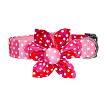 Clasp Collar with Flower [Polka Stripes]
