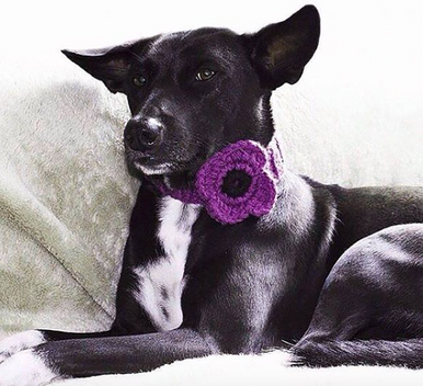 Purple poppy flower for use on dog collar. Velcro fastening.