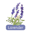b-n-all-natural-scent-icon-01-lavendar.png