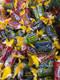 Jolly Ranchers Hard Candy