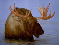 Bull Moose Original Pastel Drawing by the Porter Family