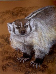 North American Badger Original Pastel Drawing by the Porter Family