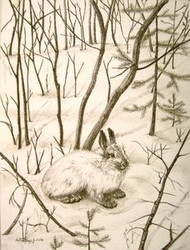 Snowshoe Hare Original Charcoal Drawing by the Porter Family