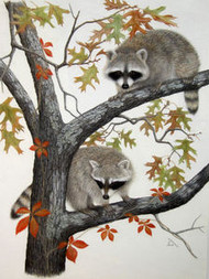 Porter Family Original Pastel Drawing 2 Raccoons in Tree