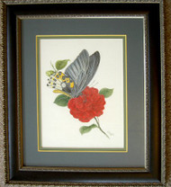 Framed Original Colored Pencil Drawing Blue Butterfly on Red Flower
