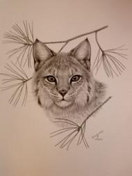 Original Charcoal Drawing Bobcat with Pine