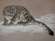 Original Pastel Drawing Full Snow Leopard