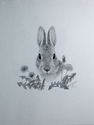 Original Charcoal Drawing Cottontail Rabbit & Dandelion