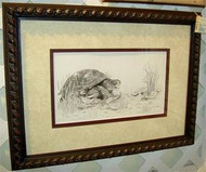 Framed Turtle Drawing by Sherry Howe