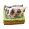 Limoges Imports 2 Spotted Pigs By Fence Limoges Box