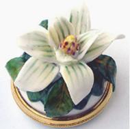 Staffordshire Magnolia B/B