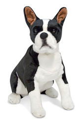 Butch the Boston Terrier