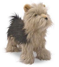 Winston the Yorkshire Terrier