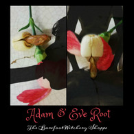 Adam & Eve Root Pair