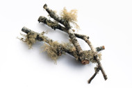 Green Lichen Twigs (Pack of 3)