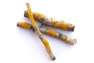 Orange Lichen Twigs (Pack of 3)