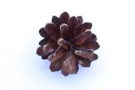 Pine Cones (3 pack)