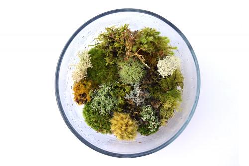 Bonsai Moss Mix