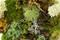 Bonsai Moss Mix Close Up