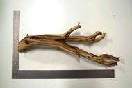 Ghostwood (GW-1008)