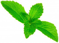 "Amazing Sugar Plant - Sweetleaf - No Calories - Stevia - 4"" Pot"