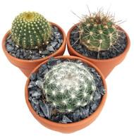 """Barrel Cactus Collection - 3 Different Plants - 4"""" Pots"""